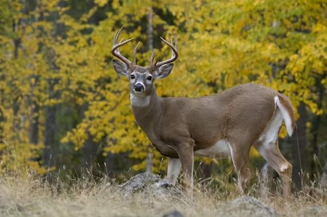 2020年美国发生了一件怪事。白尾鹿的眼球上有长毛。是核泄漏导致的动物变异吗?