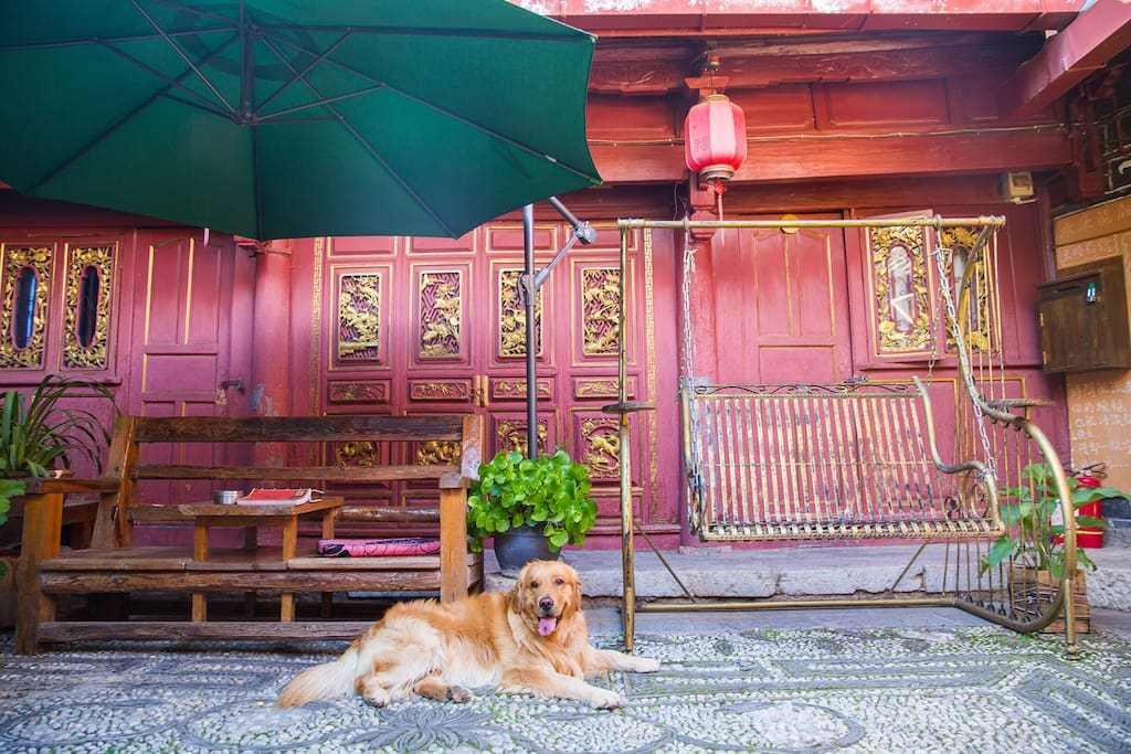 原创             在丽江找一家客栈,无聊时拍拍照片逗逗狗