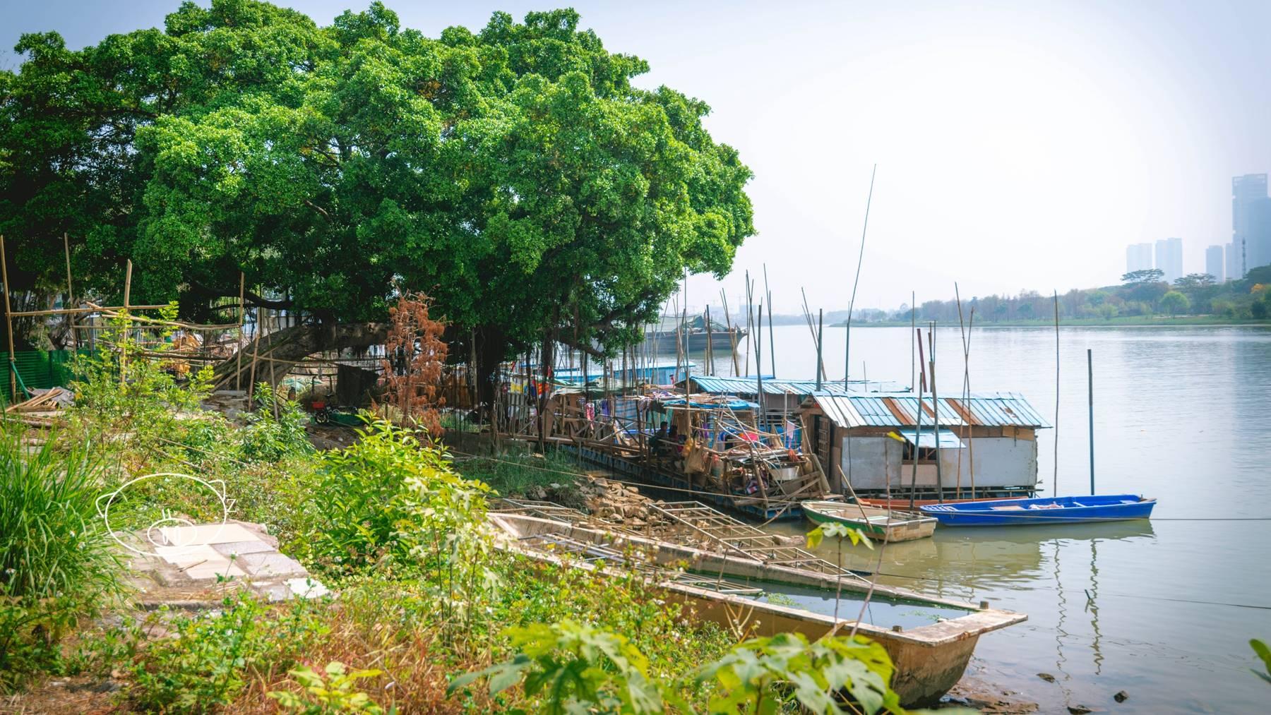 佛山 渔村文化公园看渔人摇桨归家,还能买点河鲜