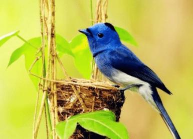 心理测试:你觉得哪只小鸟正要飞走?测出陪你到老的人是谁