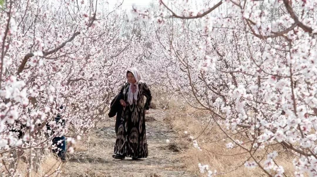新疆不止春晚的可可托海,3月花季更美