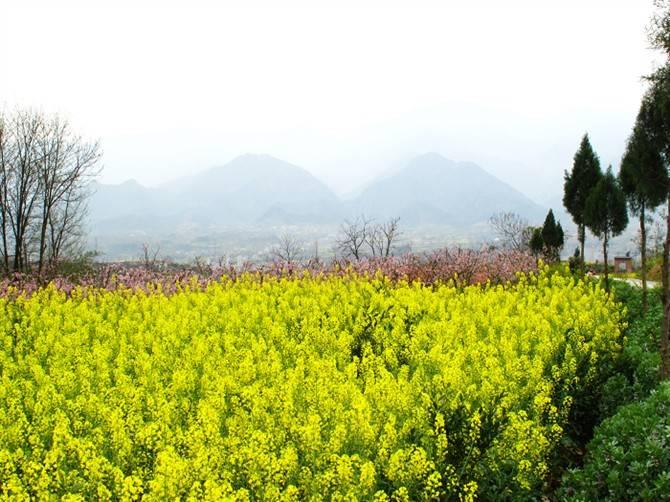 2021年安康春来早暨汉阴油菜花旅游季系列活动如期举办