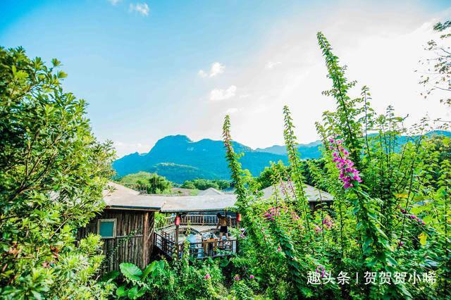 广东大山深处藏了一处树屋景区,有古老美丽的树上人家,你想住吗