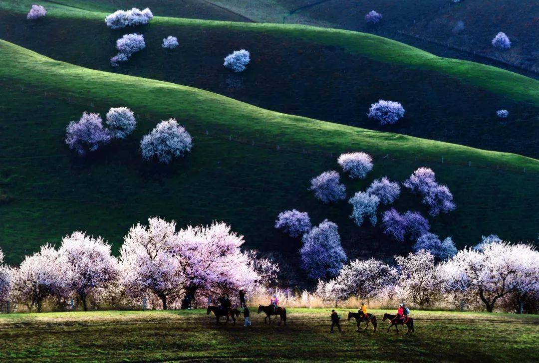 原创             美图秀春,杏花沟的桃花,湿地的天鹅,新春的火龙,老街的年味……太带入了