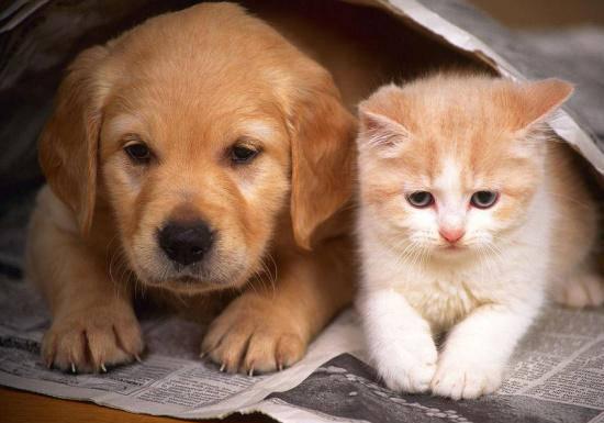 狗还是猫?研究表明养狗对老年人的精神健康更有益