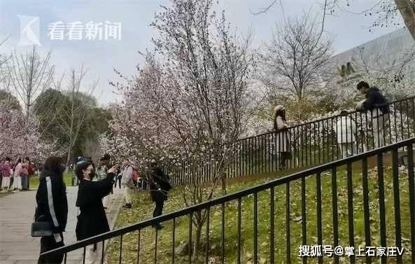 武大女生捡几千朵樱花送给校友,弥补毕业季的遗憾!