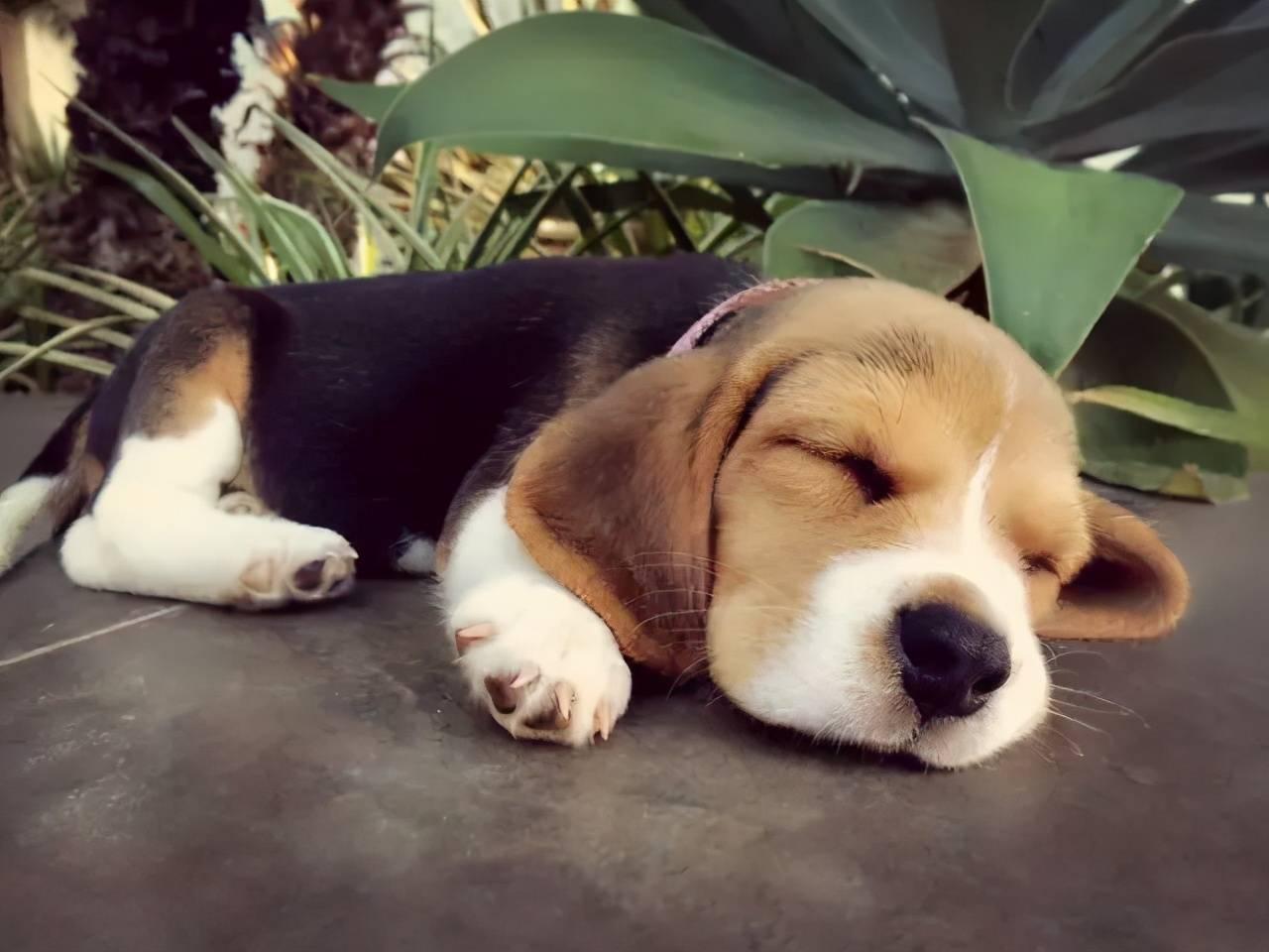 累成狗的心情短语 累成狗的幽默经典句子