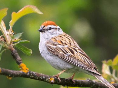 心理测试:哪只鸟正准备飞走?测测最让你念念不忘的人是谁?