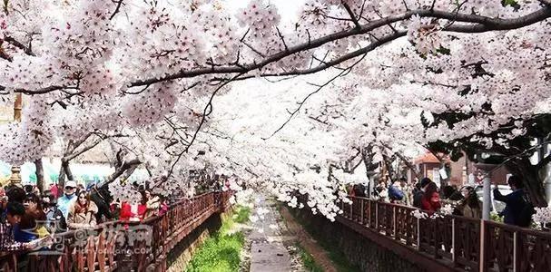 2021年樱花系列扮装品上线大盛娱乐,哪个才是你心心念念的好物?