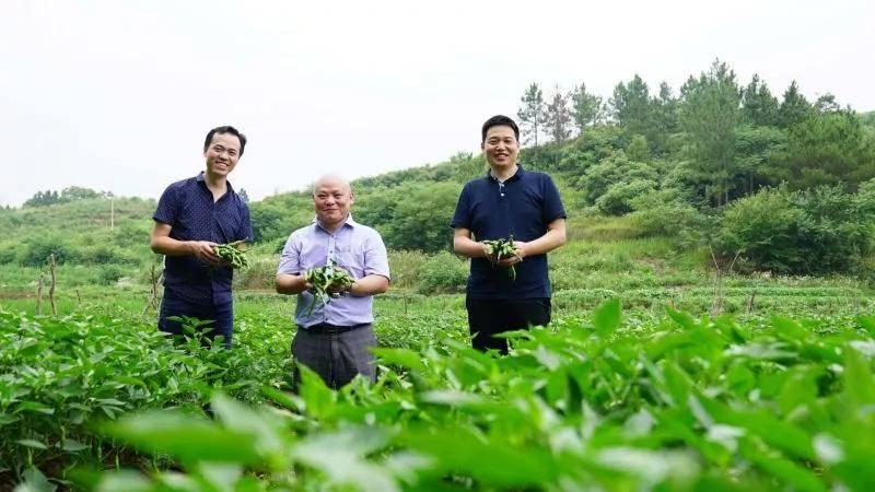 """东方红品牌创新升级之路 ——从""""单品为王""""到""""品类制胜"""" 图3"""