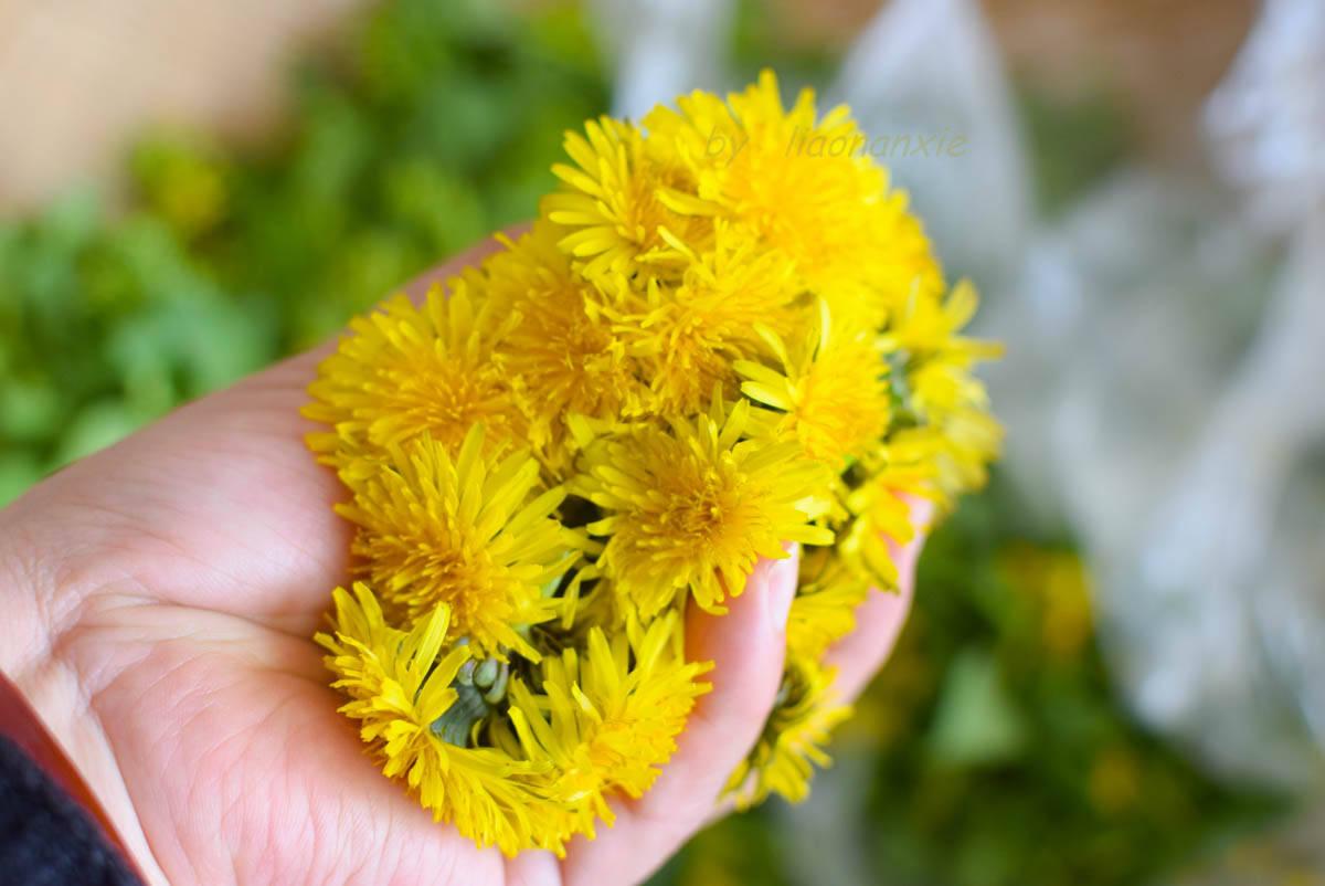 春日不可错过的花馔, 酥脆的外壳,软软的花瓣