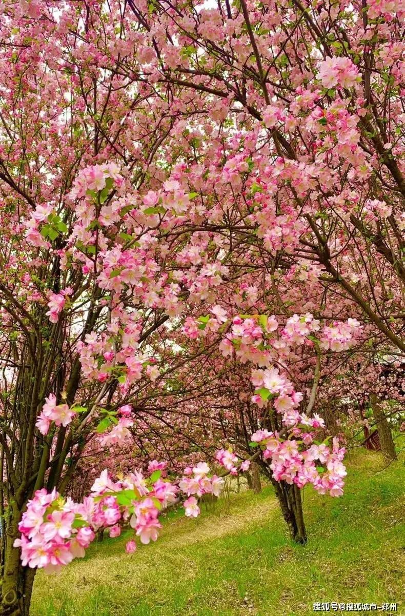 清明踏青季,嵩山景区迎来春游客流高峰