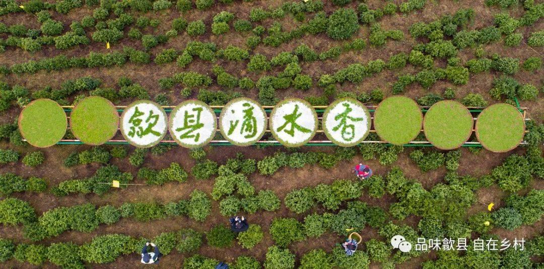 品味歙县 自在乡村 歙县滴水香头采节暨大野自驾问茶季将启动