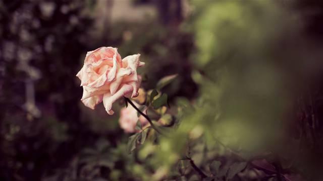 未来10天春风报喜讯,桃花牵良缘,偶遇真爱,余生相随的生肖