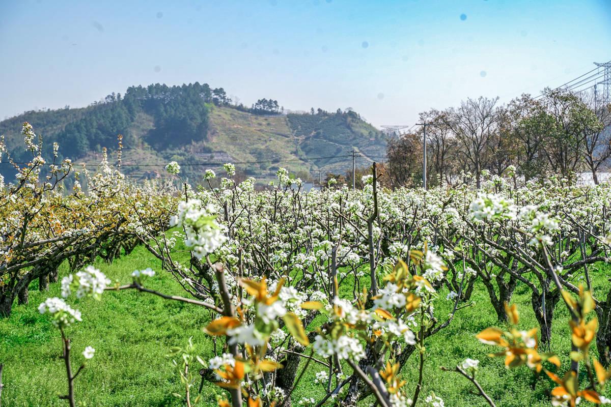 最惬意的杭州周边游,余杭鸬鸟的田园诗歌,距离杭州约1小时车程