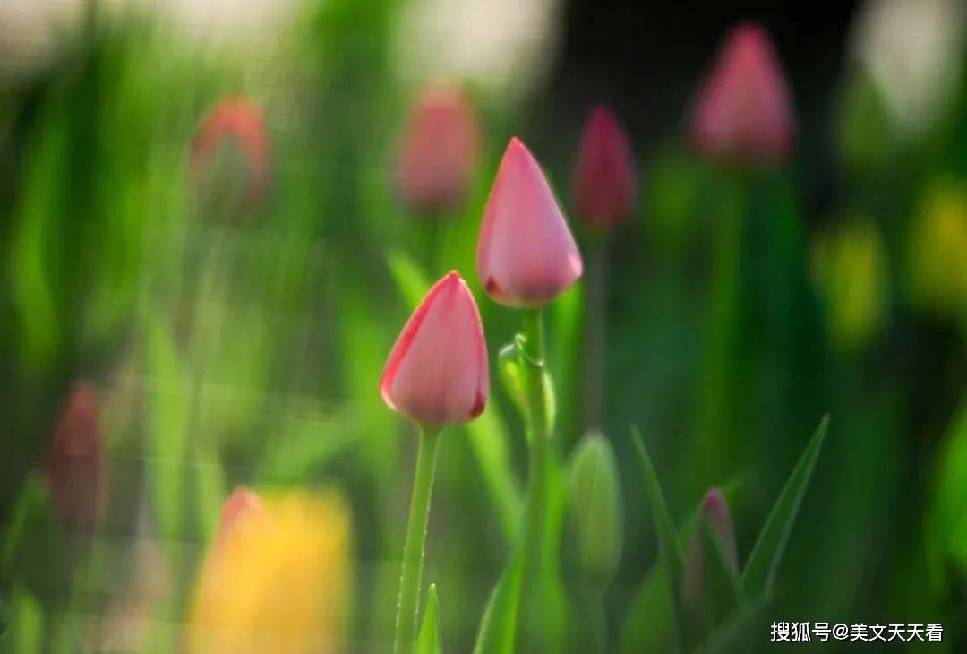 唯有真诚,世界才会与你温柔相拥