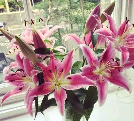 心理测试:你喜欢哪个颜色的花?测你的命好不好
