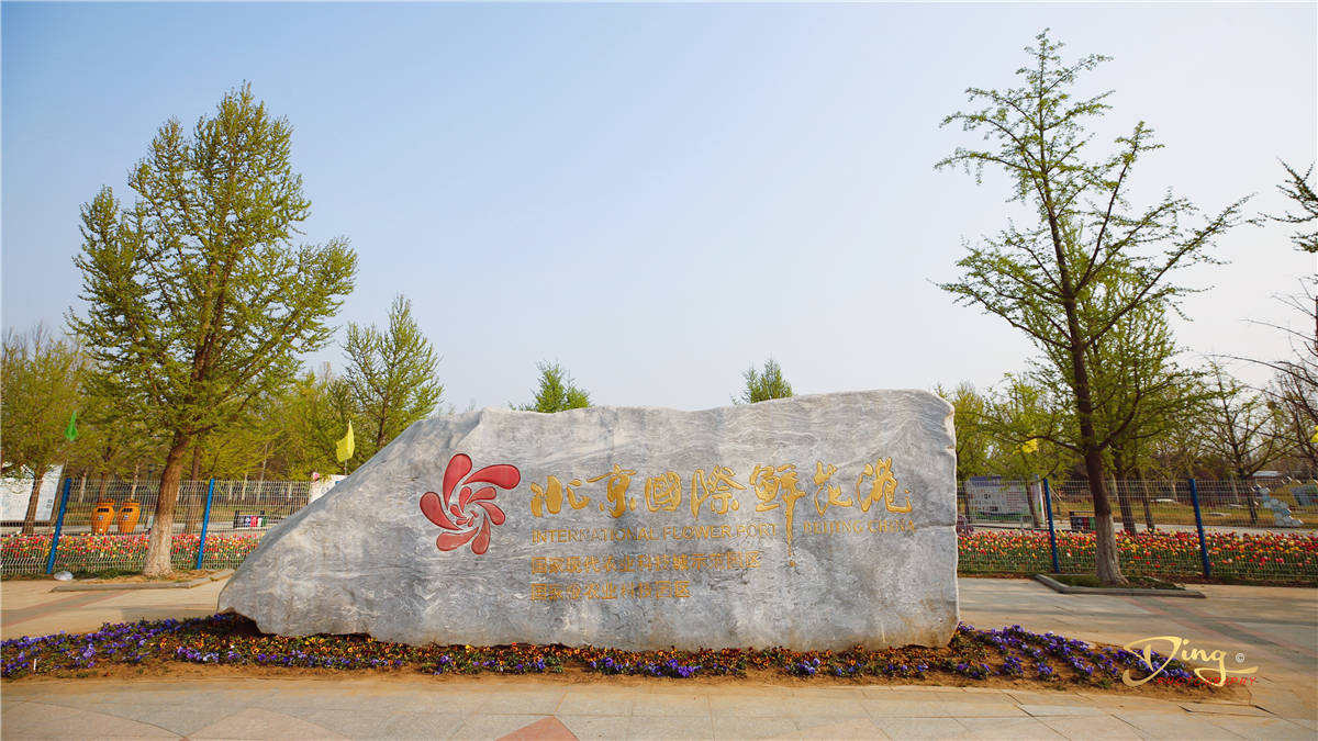 郁金香盛开的最佳时间,北京国际鲜花港,为你打开人间最美四月天