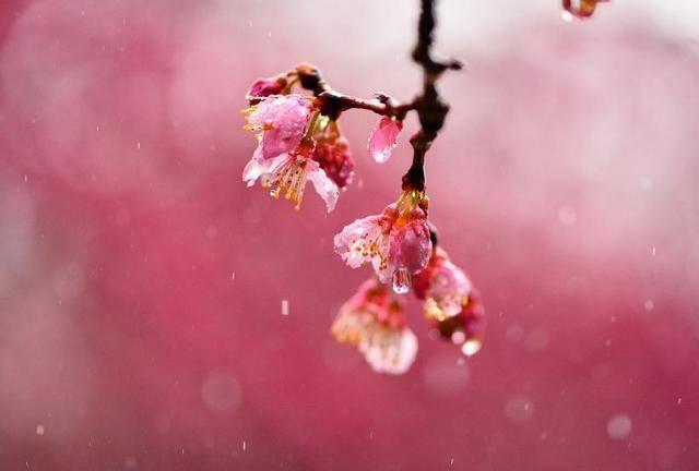 4月底26号到5月上旬,财神到,3生肖大财旺,小财旺,生活旺上加旺  第3张