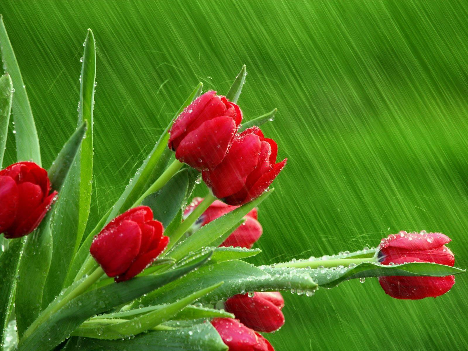 4月26日爱情运势:相遇良人,一往情深的四大星座  第1张