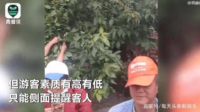 天门山景区游客、暴力采摘果子、多数为老年人  第3张