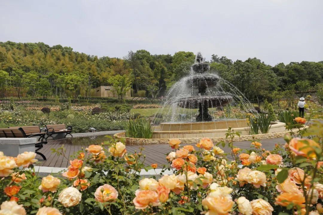 """五一不必出远门,家门口这个""""法国莫奈花园"""",让所有人都流连忘返"""