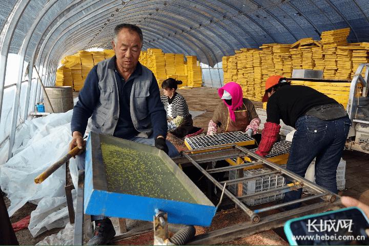 河北新发地:打通产供销渠道 助力乡村振兴
