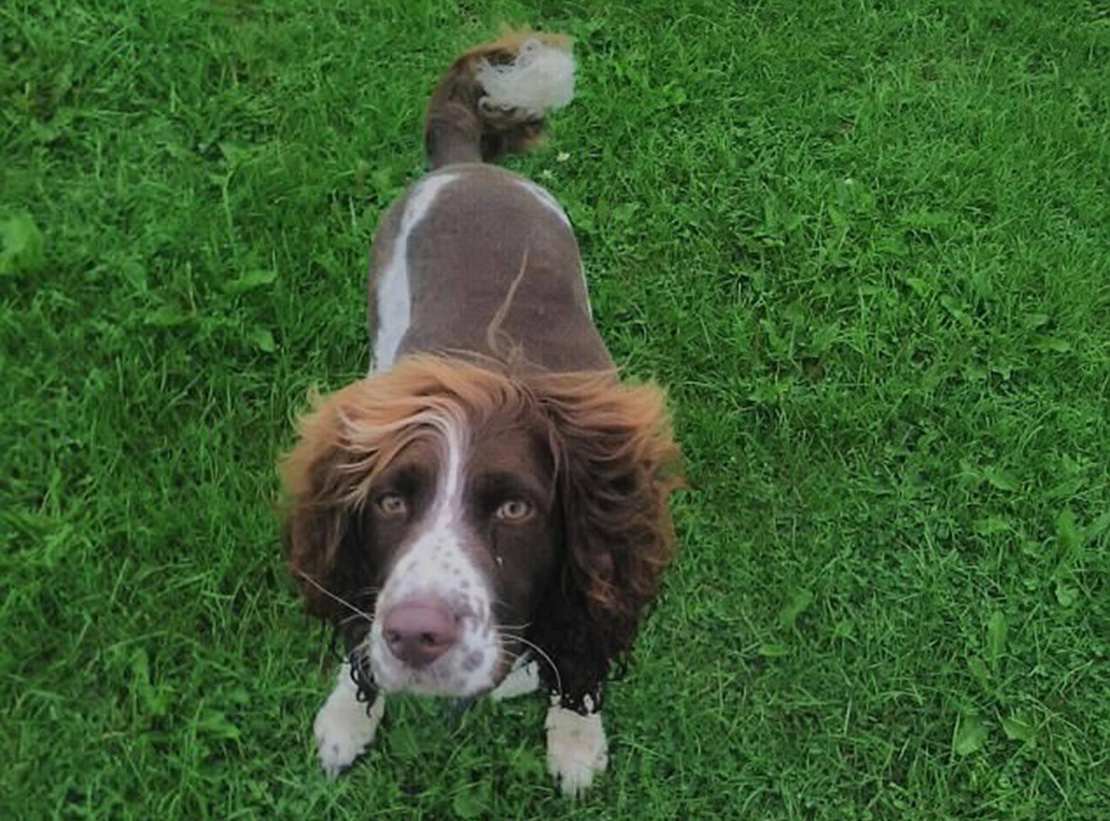 警犬新发型照片爆红网络 引得网友捧腹大笑