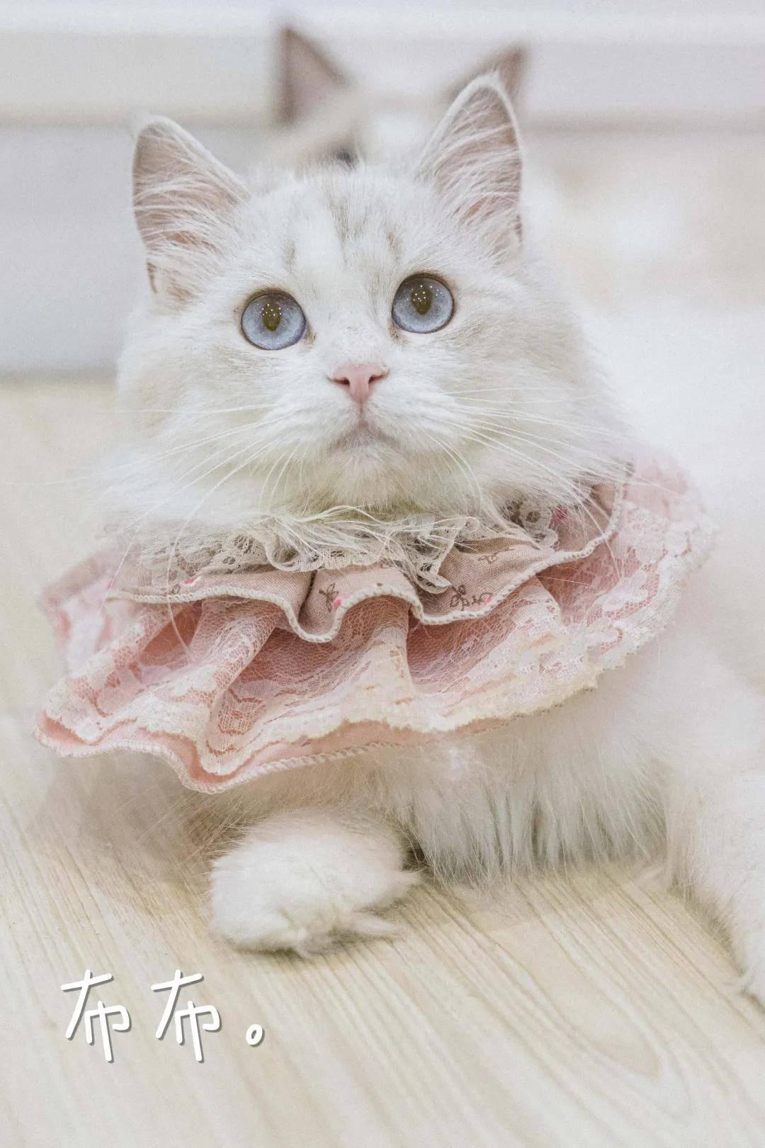 来天河这店,rua猫猫、吃下午茶