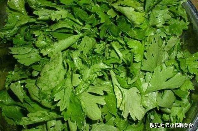 芹菜叶不要再扔掉了,比茎营养高,这样做更美