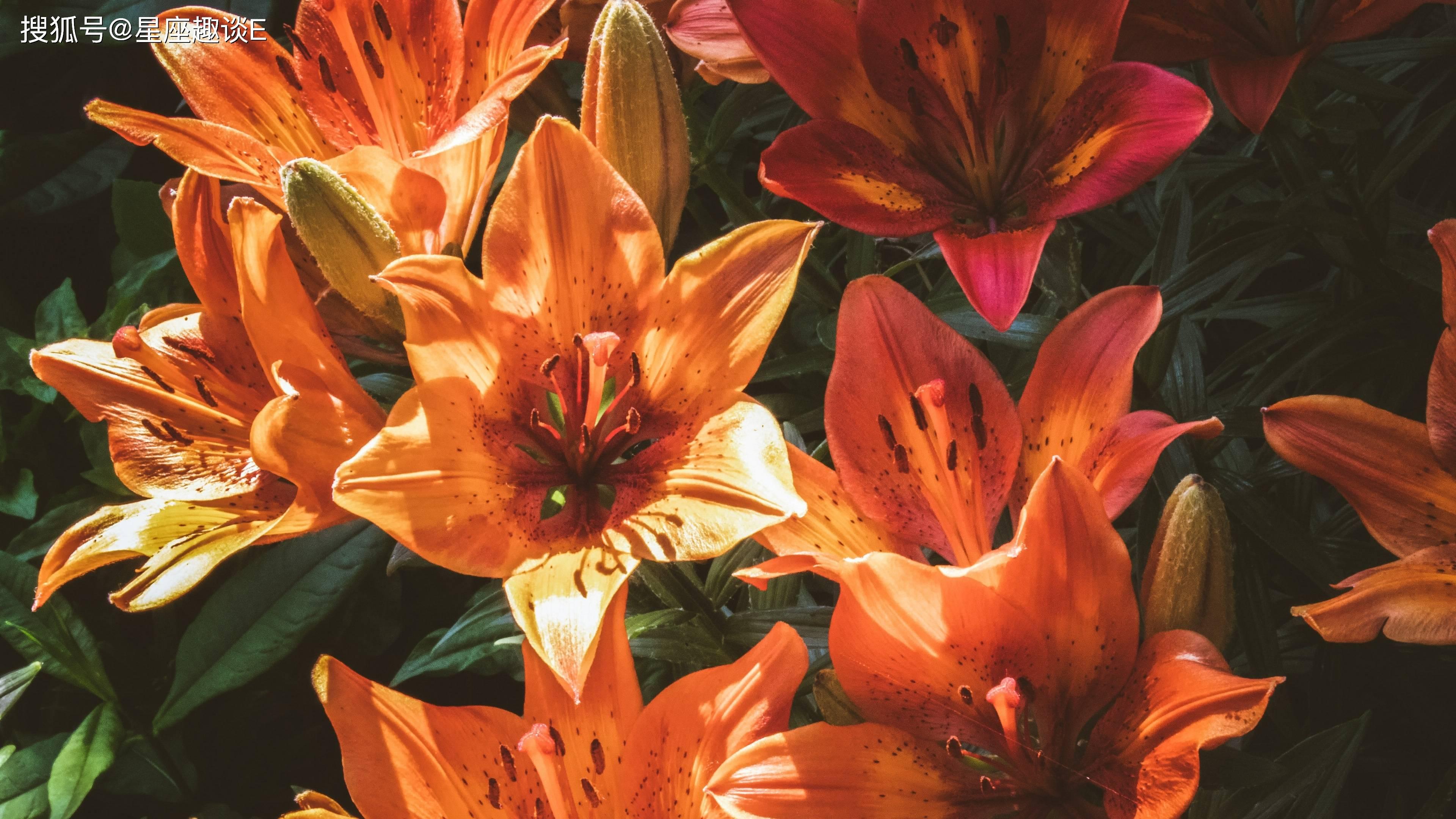 在6月份,桃花渐开,鸾凤和鸣,与尔偕老的三大星座  第2张
