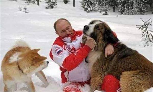 流浪狗泛滥成灾,为了世界杯的安全,俄罗斯对流浪狗进行了大灭杀