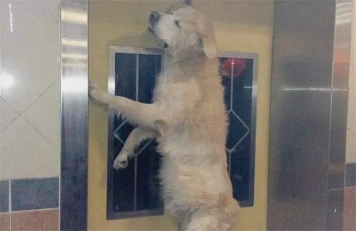 """""""惊悚""""视频在网络上传疯了:狗子在电梯里上吊"""