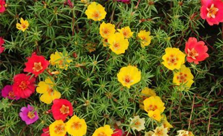 4种花,家里养一盆,花期长、花量大,太美啦