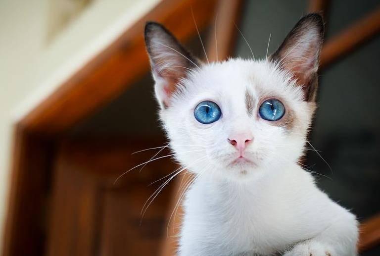 寵物貓活潑的生活,笨拙的身手可愛極了