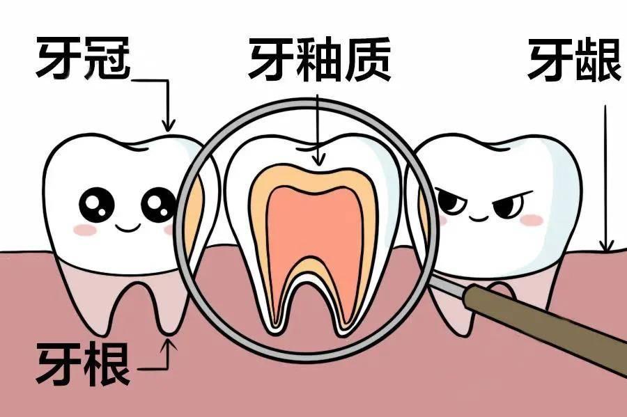 补钙可以坚固牙齿?真相是:黄花菜早凉了