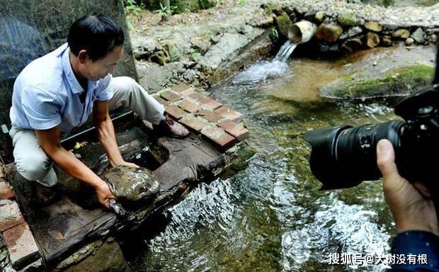 农民听到溪水边传来婴儿般叫声,走去查看竟是国宝