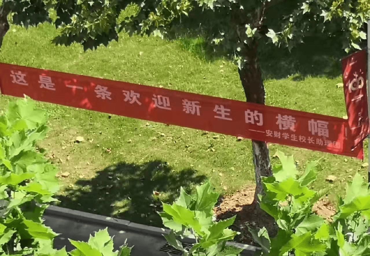 """又是一年开学季,安徽财经大学迎新标语走红,网友笑出""""鹅叫"""""""