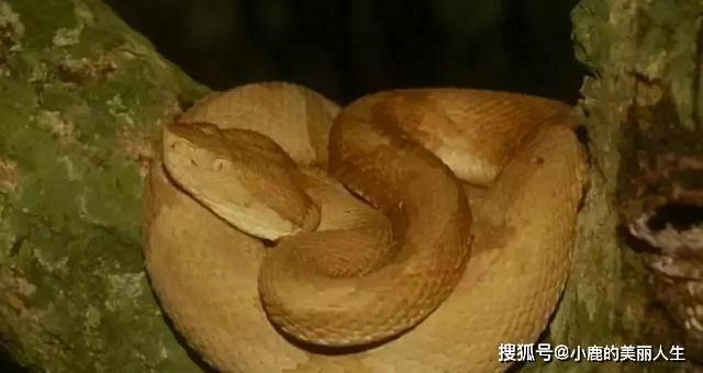 巴西蛇岛和大连蛇岛:两大致命岛屿,上万条剧毒蛇,哪个更危险?