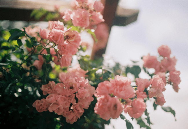10月上旬,真情意切,桃花朵朵,好运来临,携手相伴,感情美满