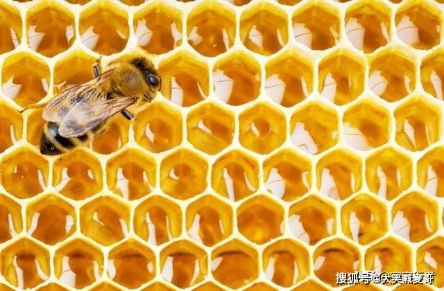 蜂王在死前做的3件事,每一件都很伟大,却揭示蜂巢社会的残酷