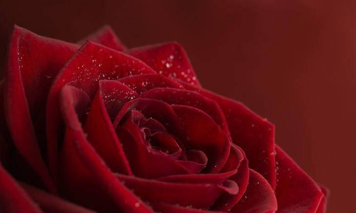 """原创             爱情像""""龙卷风""""的4大星座,懂得克制,柔情都给了她"""