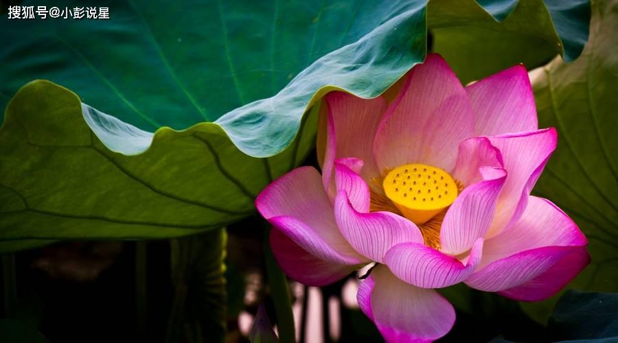 10月下旬,桃花缠身,财帛如雨,一家人安康的生肖