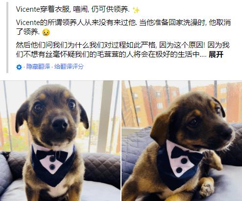全世界最悲伤的狗:穿上了晚礼服,却等不到主人接它回家