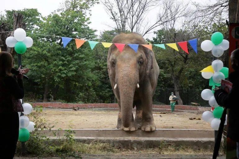 """""""全世界最孤独的大象"""",被解救了"""