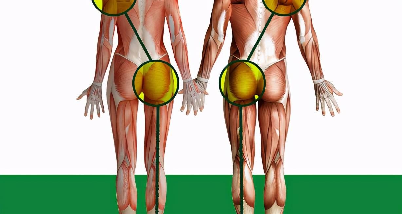 """什么是""""臀部失忆症""""?塑造蜜桃臀要知晓3个运动,轻松塑造臀部_身体"""