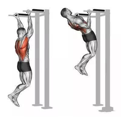 16张图告诉你背部的全面训练!