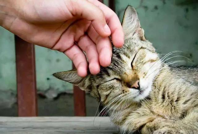 如何让猫咪不紧张图片