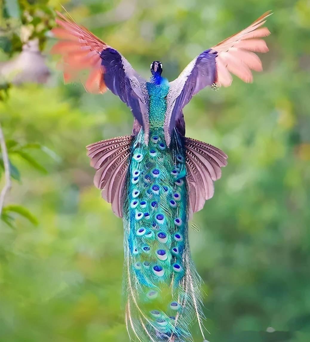 梦见天上。有一只孔雀在飞? 梦见天上飞机成群大战