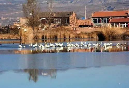 @山西人,开始计划春游去哪儿了吗?这8大湿地公园值得一游~  第2张
